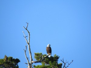 maine birding