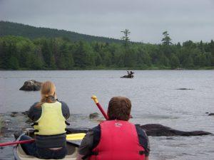 moose canoe tour