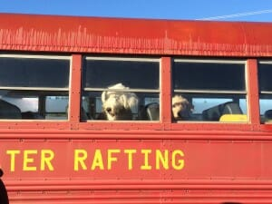 Red Bus With Dogs in the Window